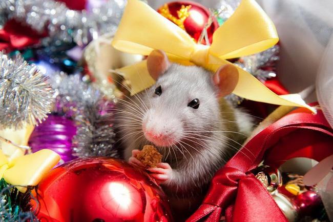 год белой крысы 2020